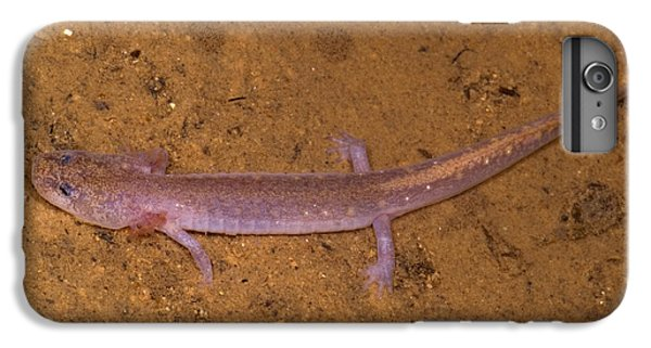 Ozark Blind Cave Salamander IPhone 6s Plus Case