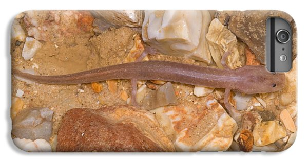 Ozark Blind Cave Salamander IPhone 6s Plus Case by Dante Fenolio
