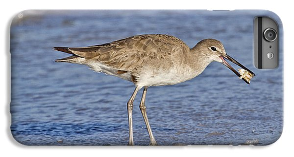 Sandpiper iPhone 6s Plus Case - All In A Day by Betsy Knapp