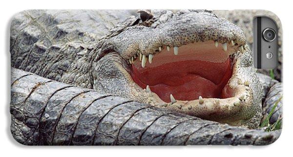 American Alligator Alligator IPhone 6s Plus Case by Tim Fitzharris