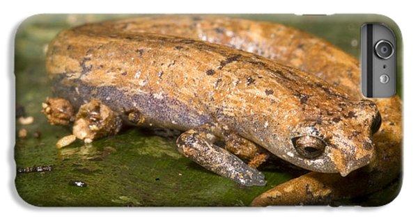 Bolitoglossine Salamander IPhone 6s Plus Case by Dante Fenolio