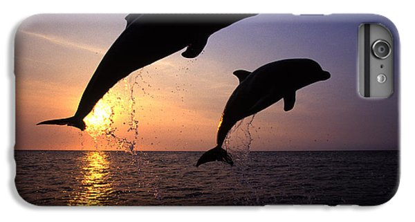 Dolphin iPhone 6s Plus Case - Bottlenose Dolphins by Francois Gohier and Photo Researchers