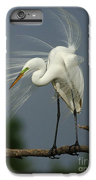 Great Egret IPhone 6s Plus Case by Bob Christopher