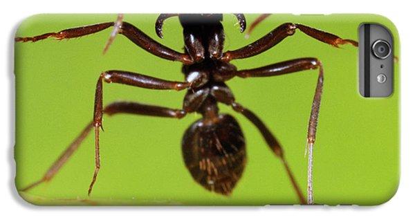 Japanese Slave-making Ant Polyergus IPhone 6s Plus Case by Satoshi Kuribayashi