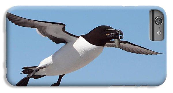 Razorbill In Flight IPhone 6s Plus Case by Bruce J Robinson