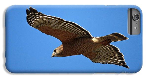 Red Shouldered Hawk In Flight IPhone 6s Plus Case by Carol Groenen