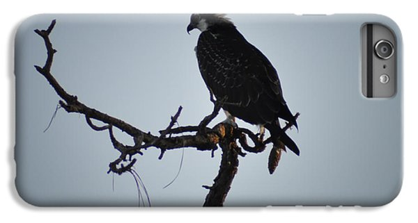 The Osprey IPhone 6s Plus Case by Bill Cannon
