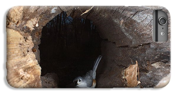 Tufted Titmouse In A Log IPhone 6s Plus Case by Ted Kinsman
