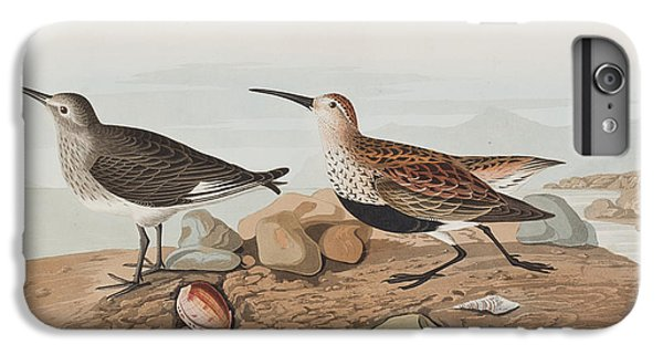 Sandpiper iPhone 6s Plus Case -  Red Backed Sandpiper by John James Audubon