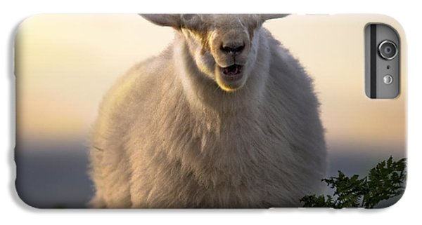 Sheep iPhone 6s Plus Case - Baa Baa by Angel Ciesniarska