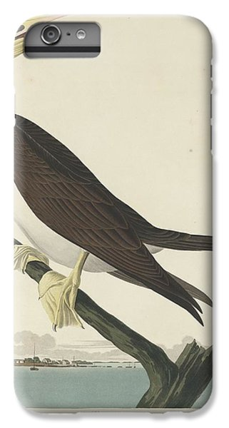Booby Gannet IPhone 6s Plus Case by Rob Dreyer
