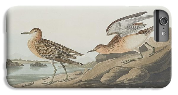 Buff-breasted Sandpiper IPhone 6s Plus Case