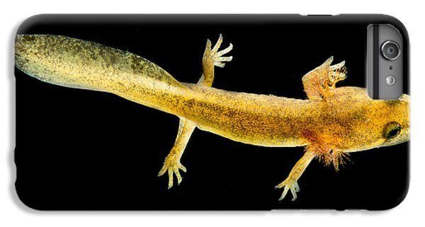 California Giant Salamander Larva IPhone 6s Plus Case by Dant� Fenolio