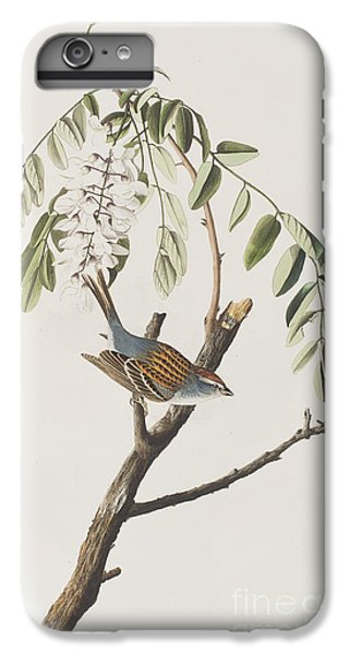 Chipping Sparrow IPhone 6s Plus Case