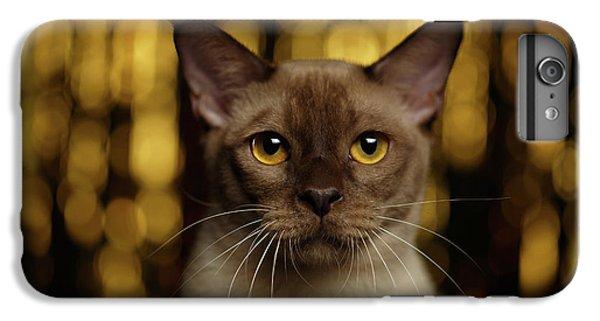 Cat iPhone 6s Plus Case - Closeup Portrait Burmese Cat On Happy New Year Background by Sergey Taran