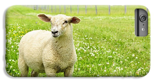 Sheep iPhone 6s Plus Case - Cute Young Sheep by Elena Elisseeva