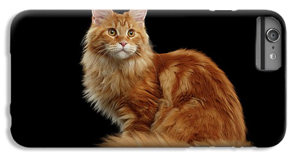 Cat iPhone 6s Plus Case - Ginger Maine Coon Cat Isolated On Black Background by Sergey Taran