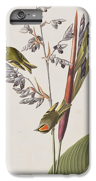 Golden-crested Wren IPhone 6s Plus Case by John James Audubon