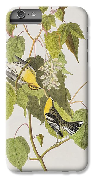 Hemlock Warbler IPhone 6s Plus Case by John James Audubon