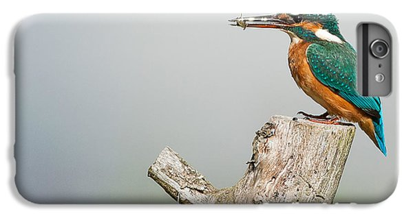 Kingfisher IPhone 6s Plus Case by Paul Neville