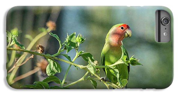 Lovely Little Lovebird  IPhone 6s Plus Case by Saija Lehtonen