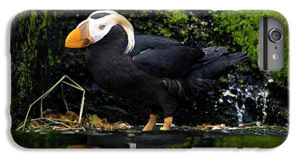 Puffin Reflected IPhone 6s Plus Case