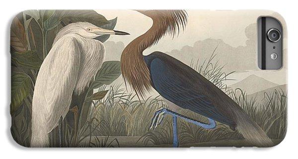 Ibis iPhone 6s Plus Case - Purple Heron by Dreyer Wildlife Print Collections