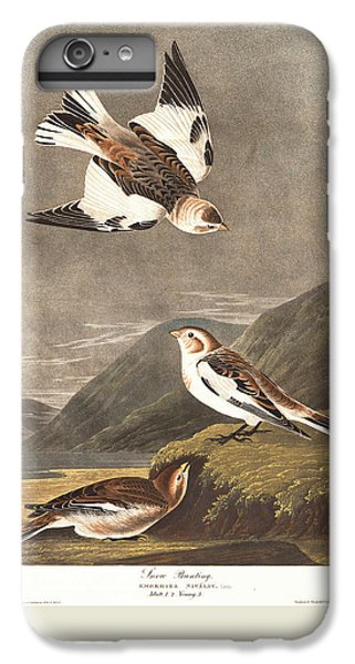 Snow Bunting IPhone 6s Plus Case by Dreyer Wildlife Print Collections