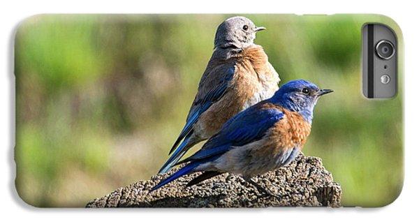 Western Bluebird Pair IPhone 6s Plus Case by Mike Dawson