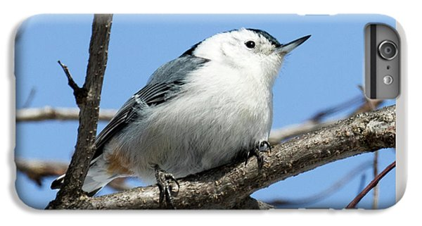 White-breasted Nuthatch IPhone 6s Plus Case by Ricky L Jones
