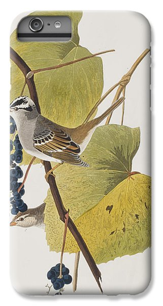 White-crowned Sparrow IPhone 6s Plus Case by John James Audubon