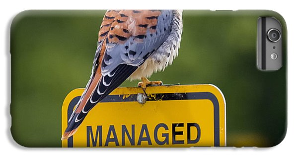 American Kestrel IPhone 6s Plus Case