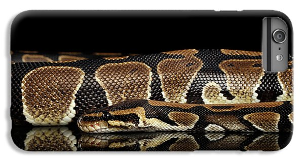 Ball Or Royal Python Snake On Isolated Black Background IPhone 6s Plus Case