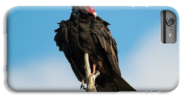 Buzzard iPhone 6s Plus Case - Looking For A Meal by Mike Dawson