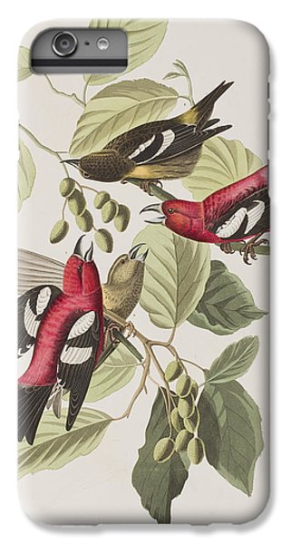 White-winged Crossbill IPhone 6s Plus Case