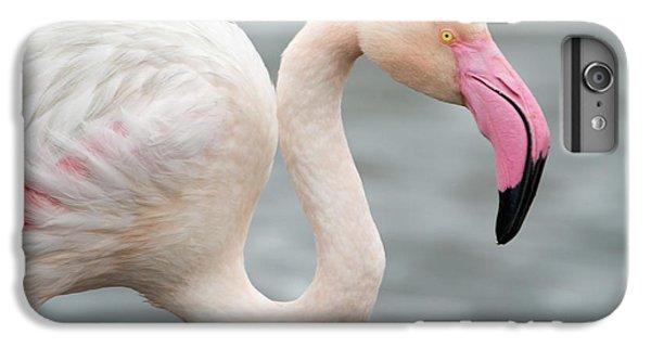Greater Flamingo Phoenicopterus Roseus IPhone 6s Plus Case by Panoramic Images