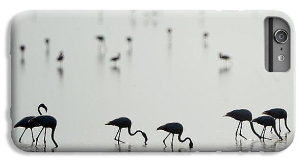 Greater Flamingos Phoenicopterus Roseus IPhone 6s Plus Case by Panoramic Images