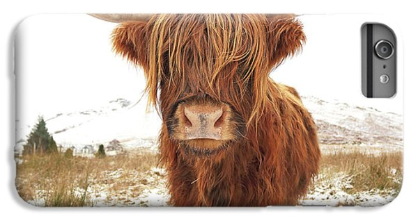 Cow iPhone 6s Plus Case - Highland Cow by Grant Glendinning