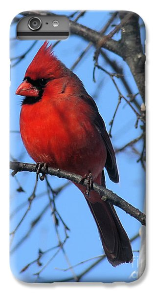 Northern Cardinal IPhone 6s Plus Case by Ricky L Jones