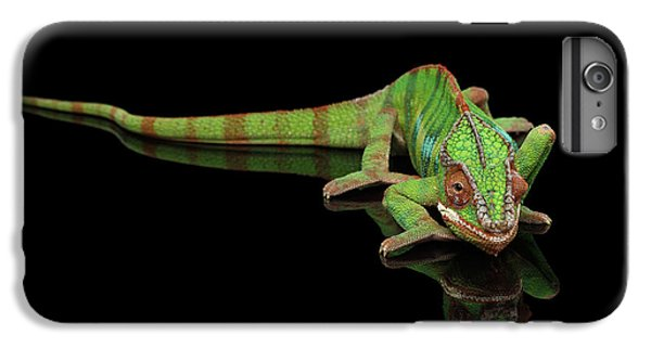 Sneaking Panther Chameleon, Reptile With Colorful Body On Black Mirror, Isolated Background IPhone 6s Plus Case