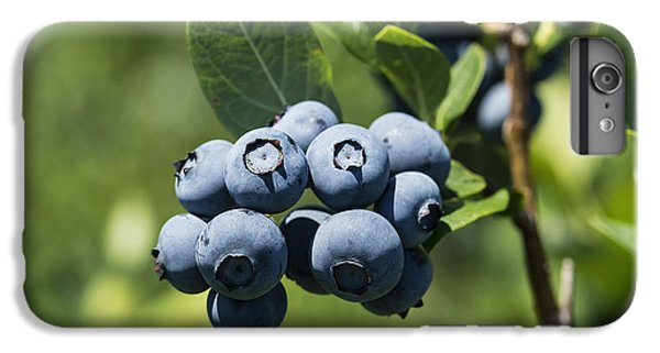 Blueberry Bush IPhone 6s Plus Case by John Greim