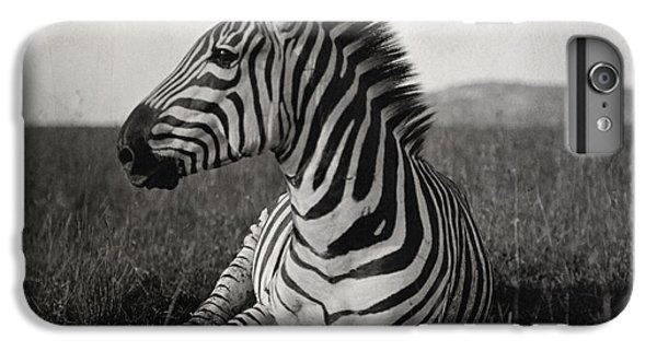 Zebra iPhone 6s Plus Case - A Burchells Zebra At Rest by Carl E. Akeley