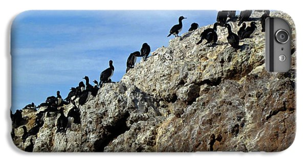 A Gulp Of Cormorants IPhone 6s Plus Case by Sandy Taylor