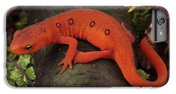 A Red Eft Crawls On The Forest Floor IPhone 6s Plus Case