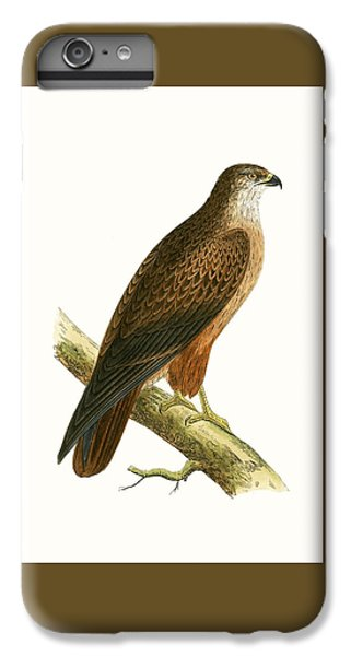 Buzzard iPhone 6s Plus Case - African Buzzard by English School