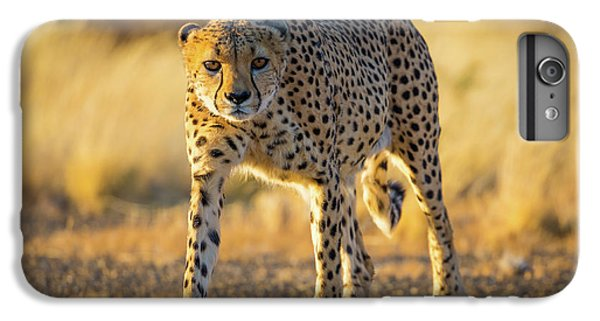African Cheetah IPhone 6s Plus Case by Inge Johnsson