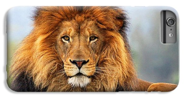 African Lion 1 IPhone 6s Plus Case