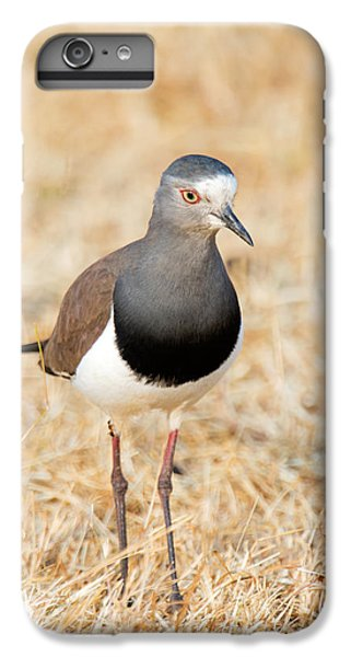 Lapwing iPhone 6s Plus Case - African Wattled Lapwing Vanellus by Panoramic Images