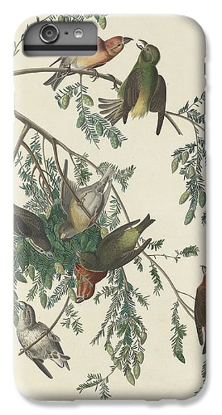 American Crossbill IPhone 6s Plus Case by Anton Oreshkin