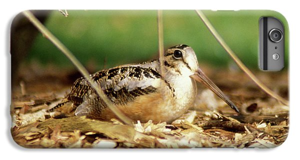American Woodcock IPhone 6s Plus Case by John Burk